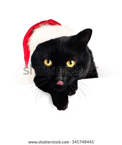 Christmas Cat and White Blank Paper Banner Background. Black Cat in Santa Hat - stock photo