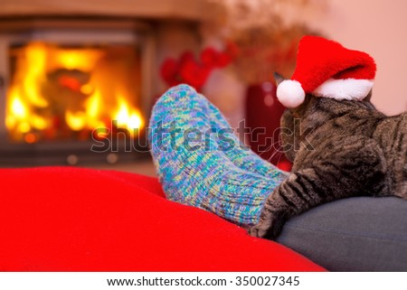 Christmas cat by the fireplace.