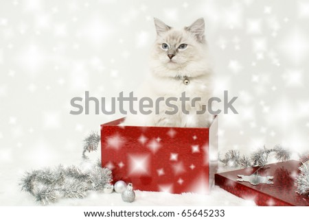 christmas cat gift - stock photo