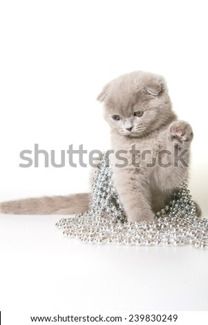 Christmas cat. Gray kitten with Christmas beads on a white background. Gray kitten Scottish Fold. Christmas kitten with christmas decorations on a white background. - stock photo