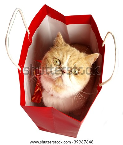 Christmas cat in red bag - stock photo