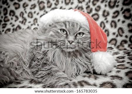 christmas cat in red Santa Claus cap - stock photo