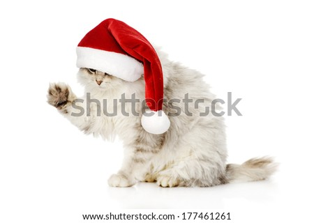 christmas cat in red Santa Claus cap. isolated on a white background - stock photo