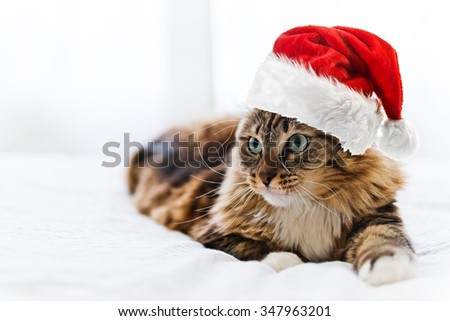 christmas cat in red Santa Claus hat - stock photo