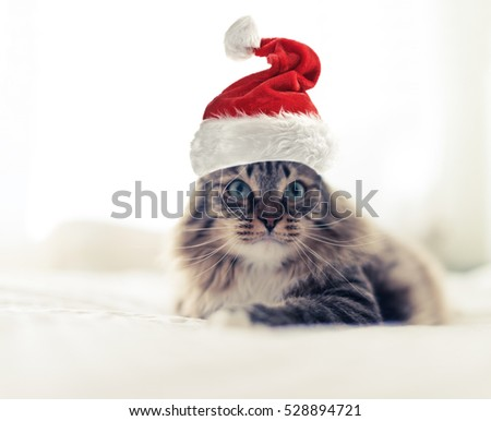 christmas cat in red Santa Claus hat.