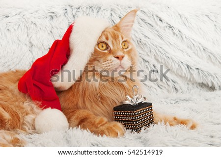 christmas cat in red Santa Claus hat with a gift