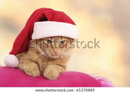 christmas cat relax on pillow isolated on light background - stock photo