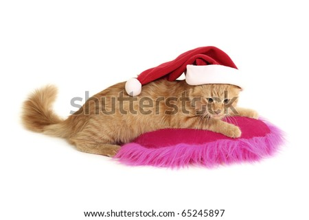 christmas cat relax on pillow isolated on white background