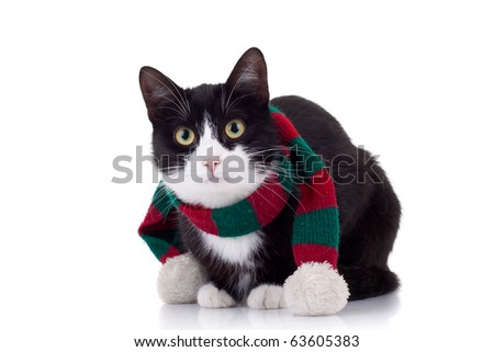 christmas cat wearing a red and green muffler over white
