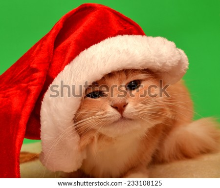 Christmas cat with Santa Claus hat isolated on white background - stock photo
