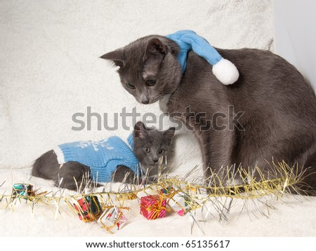 Christmas cats among a presents - stock photo