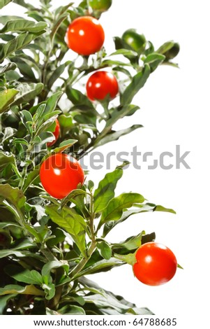Christmas cherry - stock photo