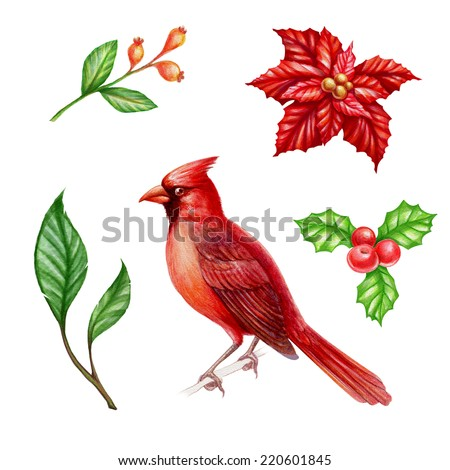 Christmas clip-art set isolated on white background, cardinal bird, poinsettia flower, holly berries, watercolor illustration - stock photo