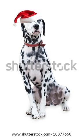 Christmas Cute Dalmatian (With Clipping Path) - stock photo