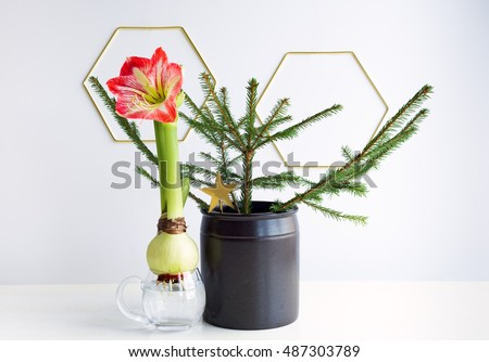 Amaryllis stock images royalty free images vectors for Amaryllis christmas decoration