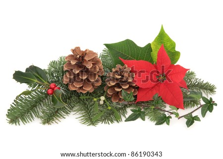 Christmas decoration of mistletoe, holly with berries, poinsettia flower, ivy, pine cones and spruce fir leaf sprig isolated over white background. - stock photo