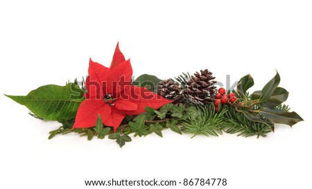 Christmas decoration of poinsettia flower, holly, ivy, pine cones and spruce fir leaf sprig isolated over white background. - stock photo
