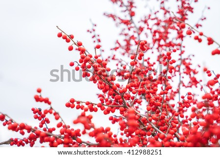 Christmas decoration red berries holly - stock photo