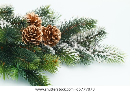 Christmas decoration with Fir branch on white background - stock photo
