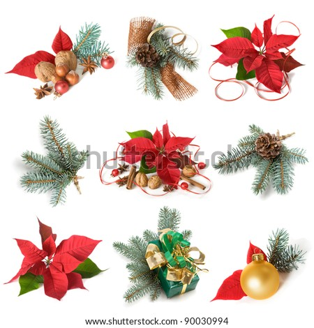 Christmas decoration with poinsettia and blue spruce, collection on white background - stock photo