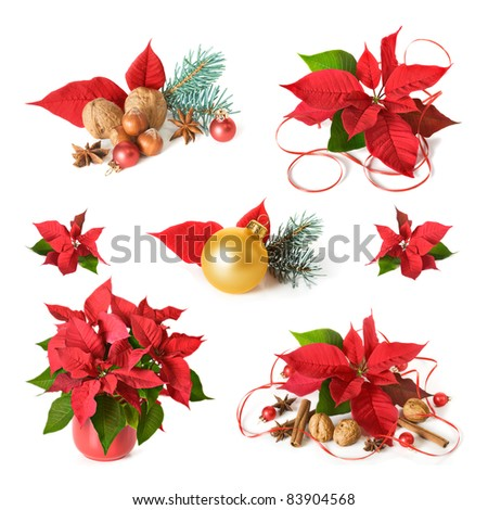 Christmas decoration with poinsettia, collection on white background - stock photo