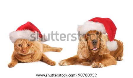 Christmas Dog and cat together, with Santa hat on the head, isolated on white background, - stock photo