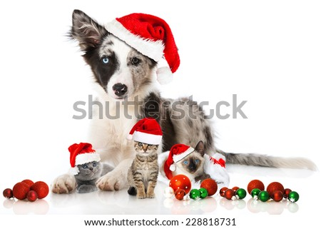 Christmas dog and cats
