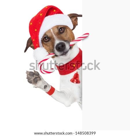 christmas dog as santa behind placard with sugar candy cane