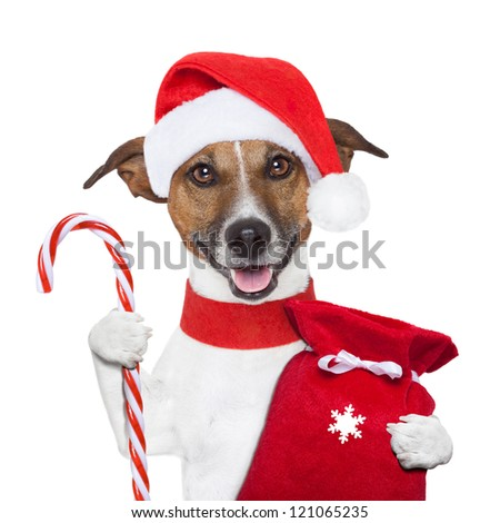christmas dog holding a candy stick and sack