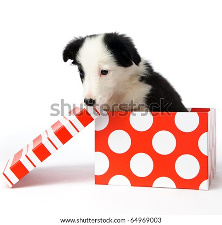 christmas dog in a gift box - stock photo