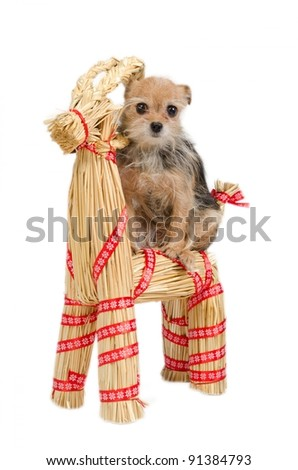 Christmas Dog is riding a straw Santa's raindeer - stock photo