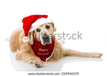 Christmas dog isolated on white - stock photo