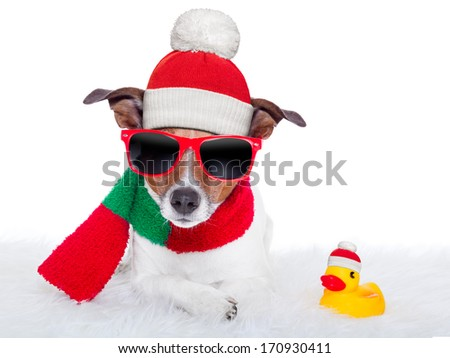 christmas dog resting on a white carpet and a rubber duck - stock photo