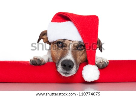 christmas dog santa baby red hat - stock photo