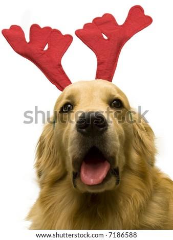 christmas dog singing on white background - stock photo