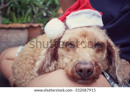 Christmas dog with hat - stock photo