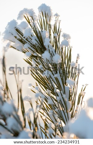 Christmas evergreen spruce tree with fresh natural snow over winter sunset background - stock photo