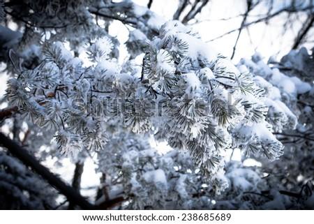 Christmas evergreen spruce tree with fresh snow - stock photo