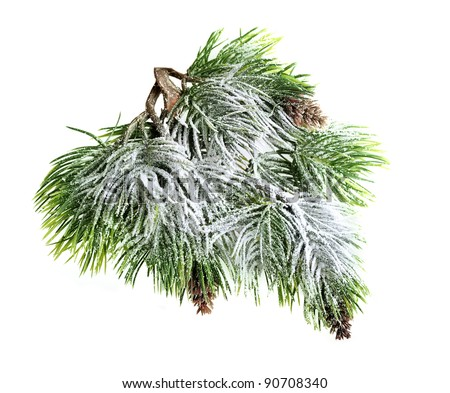 Christmas evergreen spruce tree with fresh snow isolated on white - stock photo