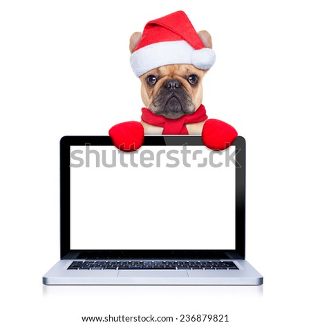 christmas  fawn french bulldog dog with santa claus  costume behind a laptop computer pc, isolated on white background - stock photo
