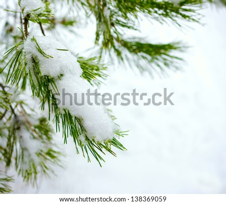 Christmas fir branch in winter forest - stock photo