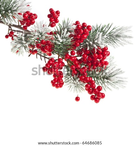 Christmas fir branch with red berries - stock photo