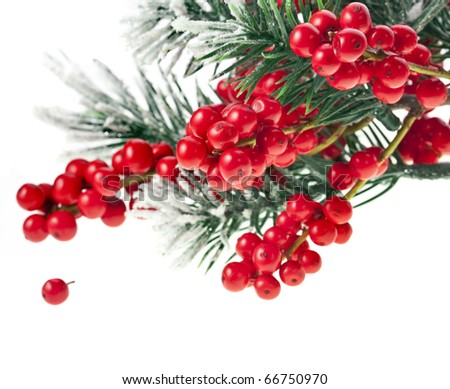Christmas fir decoration with red berries isolated on white - stock photo