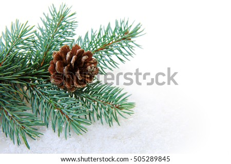 Christmas fir tree branch isolated.