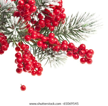 Christmas fir twig with red berries isolated on white - stock photo