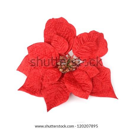 Christmas flower poinsettia - stock photo