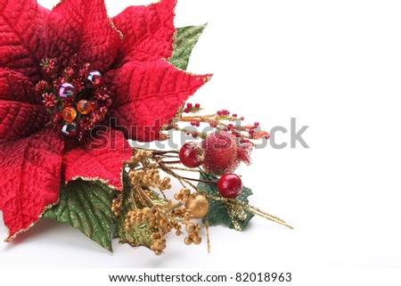 Christmas flower poinsettia isolated on white background - stock photo
