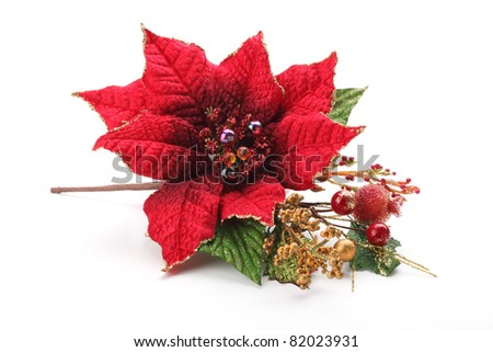 Christmas flower poinsettia isolated on white background .. - stock photo
