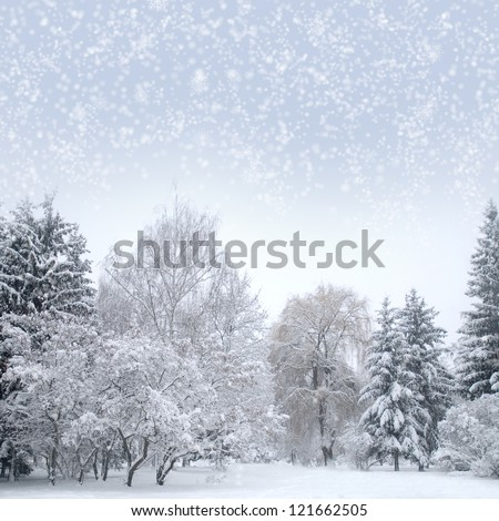 Christmas forest with snow, sky, fog