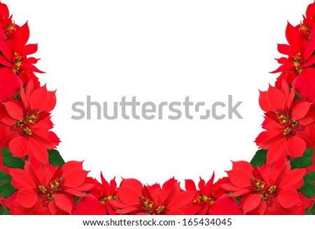 christmas frame from red poinsettias isolated on white  - stock photo